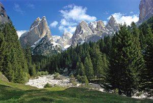 Boschi delle Dolomiti